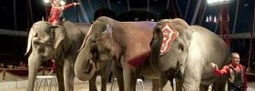 Cirkus Humberto 12. díl online ke shlédnutí